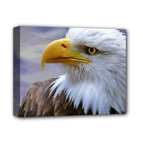 Bald Eagle Deluxe Canvas 14  X 11  (framed)