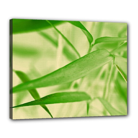 Bamboo Canvas 20  X 16  (framed)