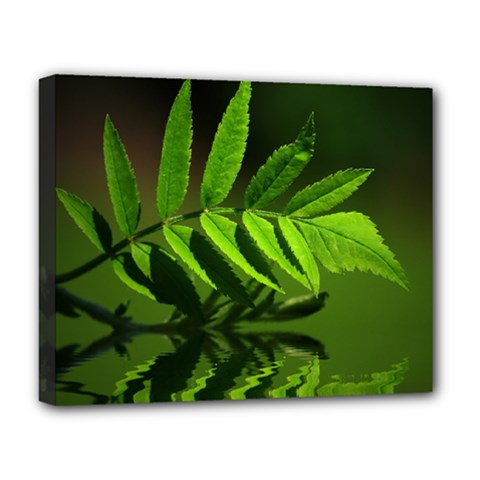 Leaf Deluxe Canvas 20  X 16  (framed) by Siebenhuehner