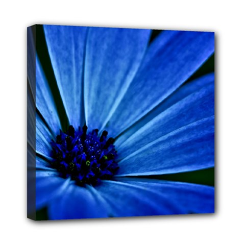 Flower Mini Canvas 8  X 8  (framed) by Siebenhuehner