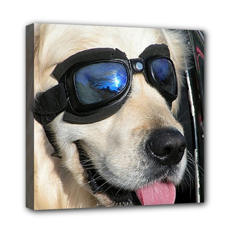 Cool Dog  Mini Canvas 8  X 8  (framed) by Siebenhuehner