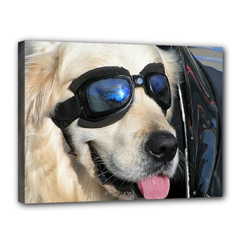 Cool Dog  Canvas 16  X 12  (framed) by Siebenhuehner