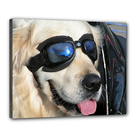 Cool Dog  Canvas 20  X 16  (framed) by Siebenhuehner