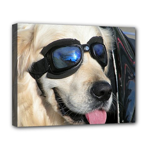 Cool Dog  Deluxe Canvas 20  X 16  (framed)