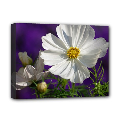 Cosmea   Deluxe Canvas 16  X 12  (framed)
