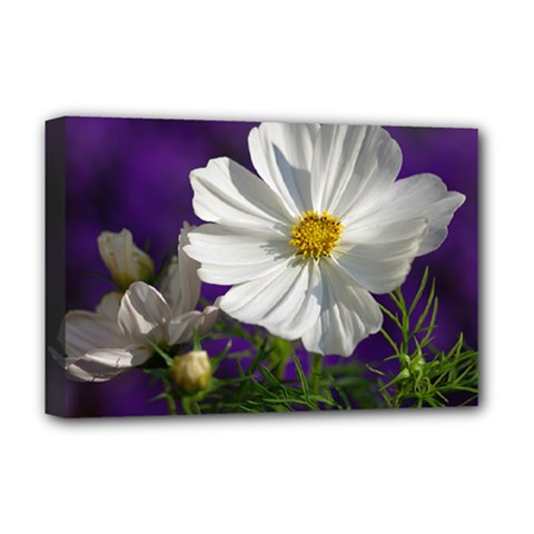 Cosmea   Deluxe Canvas 18  X 12  (framed) by Siebenhuehner