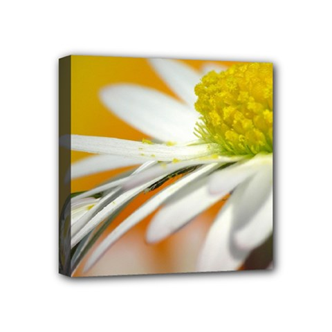 Daisy With Drops Mini Canvas 4  X 4  (framed)