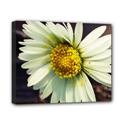 Daisy Canvas 10  X 8  (framed) by Siebenhuehner