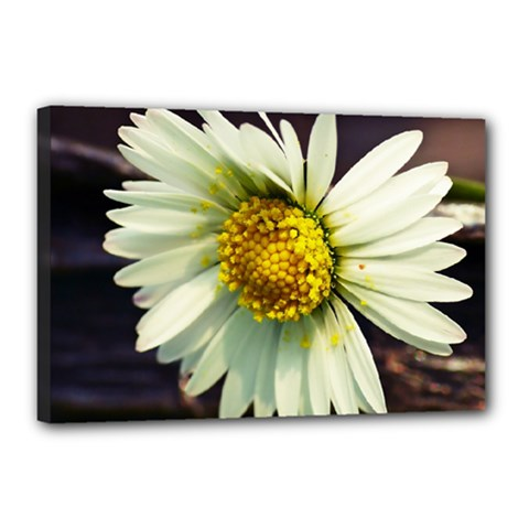 Daisy Canvas 18  X 12  (framed) by Siebenhuehner