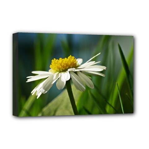 Daisy Deluxe Canvas 18  X 12  (framed) by Siebenhuehner