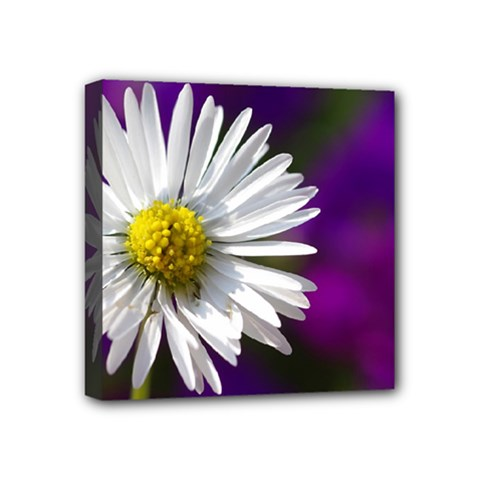Daisy Mini Canvas 4  X 4  (framed) by Siebenhuehner