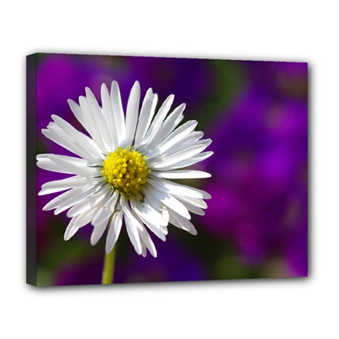 Daisy Canvas 14  X 11  (framed) by Siebenhuehner