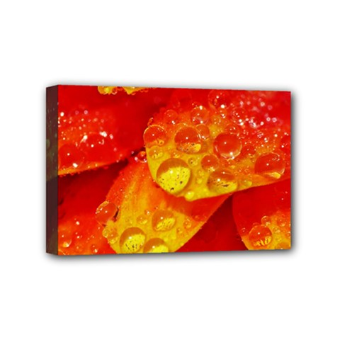 Waterdrops Mini Canvas 6  X 4  (framed) by Siebenhuehner