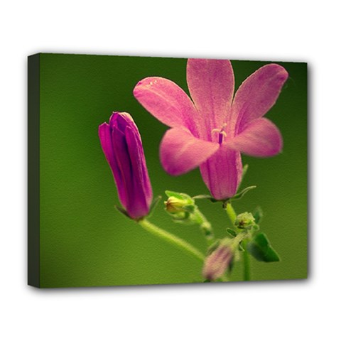 Campanula Close Up Deluxe Canvas 20  X 16  (framed) by Siebenhuehner