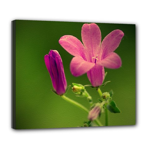 Campanula Close Up Deluxe Canvas 24  X 20  (framed) by Siebenhuehner