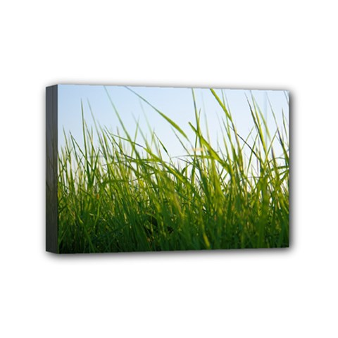 Grass Mini Canvas 6  X 4  (framed) by Siebenhuehner