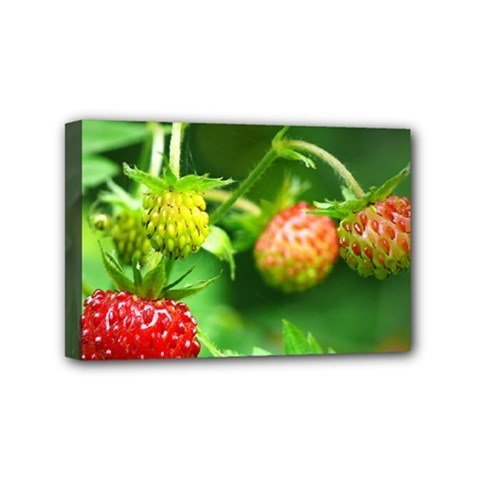 Strawberry  Mini Canvas 6  X 4  (framed) by Siebenhuehner