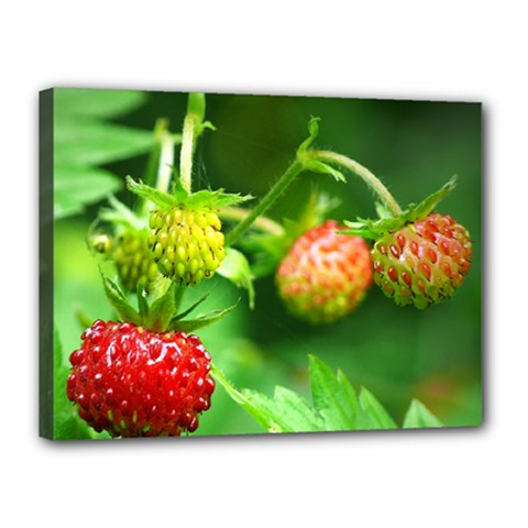 Strawberry  Canvas 16  X 12  (framed) by Siebenhuehner