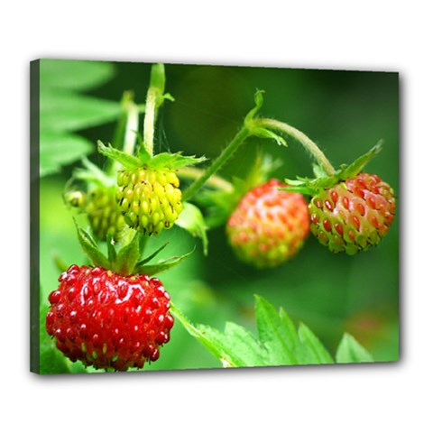 Strawberry  Canvas 20  X 16  (framed) by Siebenhuehner