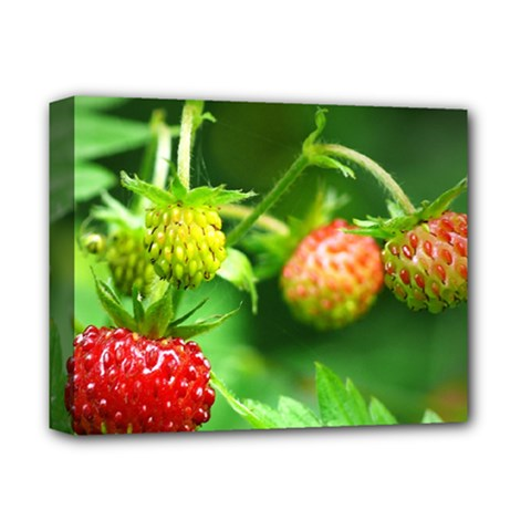 Strawberry  Deluxe Canvas 14  X 11  (framed) by Siebenhuehner