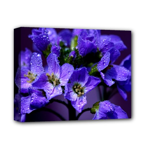 Cuckoo Flower Deluxe Canvas 14  X 11  (framed) by Siebenhuehner