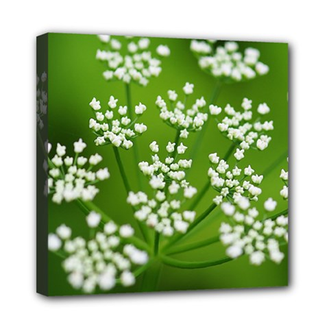 Queen Anne s Lace Mini Canvas 8  X 8  (framed) by Siebenhuehner