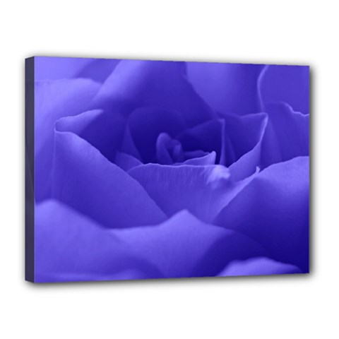 Rose Canvas 16  X 12  (framed) by Siebenhuehner