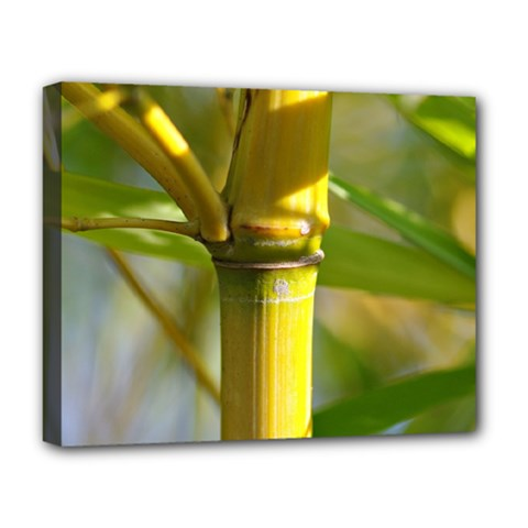 Bamboo Deluxe Canvas 20  X 16  (framed) by Siebenhuehner