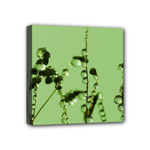 Mint Drops  Mini Canvas 4  X 4  (framed) by Siebenhuehner