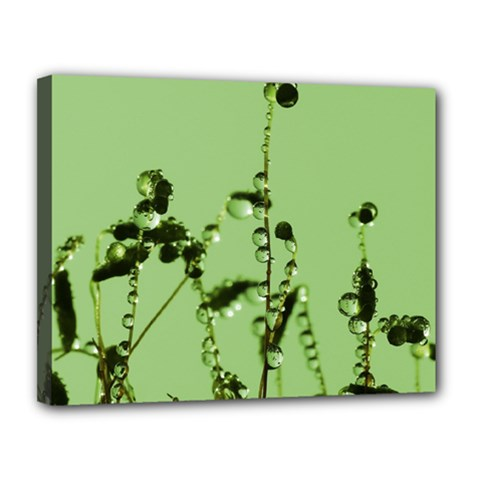 Mint Drops  Canvas 14  X 11  (framed) by Siebenhuehner
