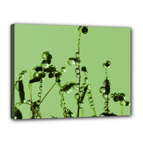 Mint Drops  Canvas 16  X 12  (framed) by Siebenhuehner