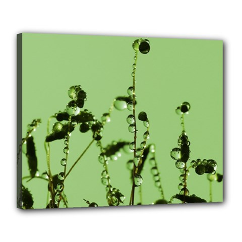 Mint Drops  Canvas 20  X 16  (framed) by Siebenhuehner