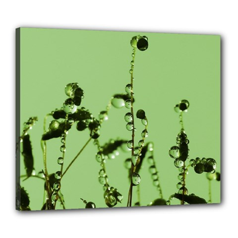 Mint Drops  Canvas 24  X 20  (framed) by Siebenhuehner