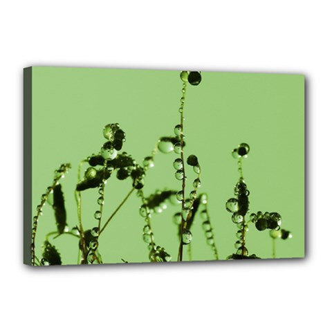 Mint Drops  Canvas 18  X 12  (framed) by Siebenhuehner