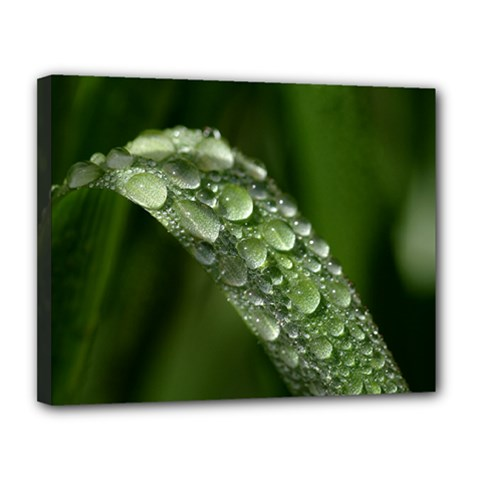 Grass Drops Canvas 14  X 11  (framed) by Siebenhuehner