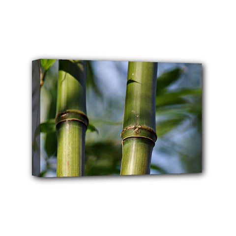 Bamboo Mini Canvas 6  X 4  (framed) by Siebenhuehner