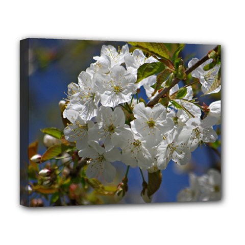 Cherry Blossom Deluxe Canvas 20  X 16  (framed) by Siebenhuehner