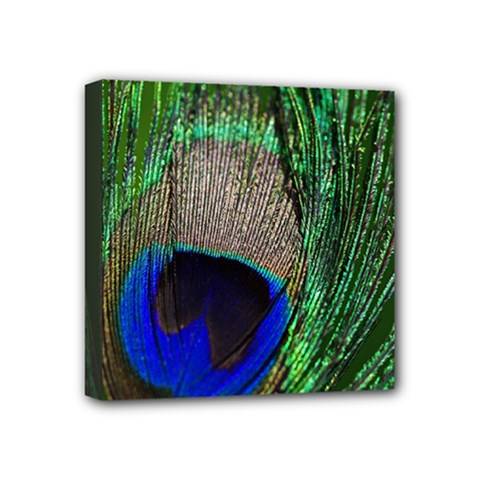 Peacock Mini Canvas 4  X 4  (framed) by Siebenhuehner