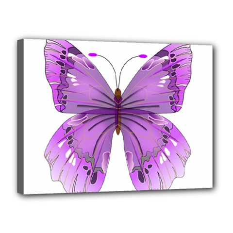 Purple Awareness Butterfly Canvas 16  X 12  (framed) by FunWithFibro