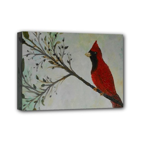 Sweet Red Cardinal Mini Canvas 7  X 5  (framed)