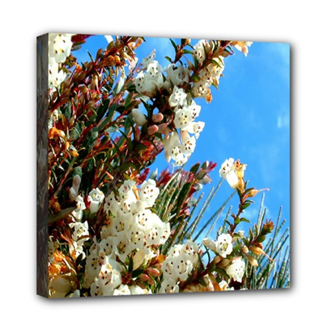 Australia Flowers Mini Canvas 8  X 8  (framed) by Rbrendes