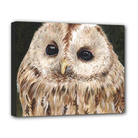 Tawny Owl Deluxe Canvas 20  X 16  (framed) by TonyaButcher