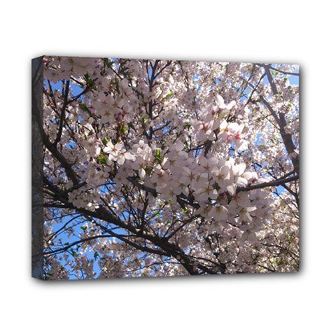 Sakura Tree Canvas 10  X 8  (framed) by DmitrysTravels
