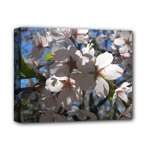 Cherry Blossoms Deluxe Canvas 14  X 11  (framed) by DmitrysTravels