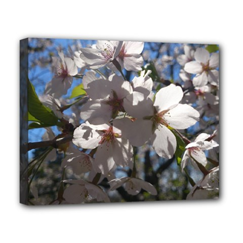 Cherry Blossoms Deluxe Canvas 20  X 16  (framed) by DmitrysTravels