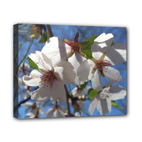 Cherry Blossoms Canvas 10  X 8  (framed) by DmitrysTravels