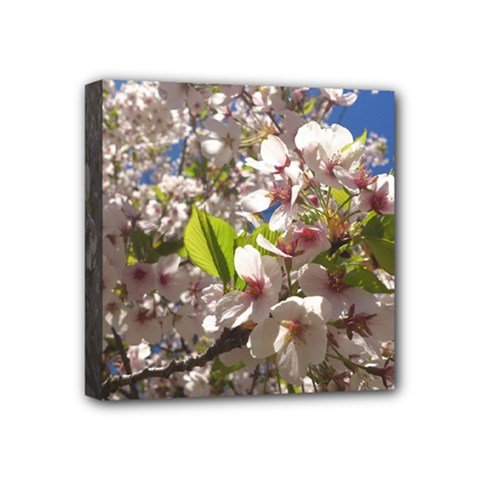 Cherry Blossoms Mini Canvas 4  X 4  (framed) by DmitrysTravels