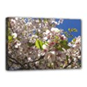 Cherry Blossoms Canvas 18  x 12  (Framed) View1