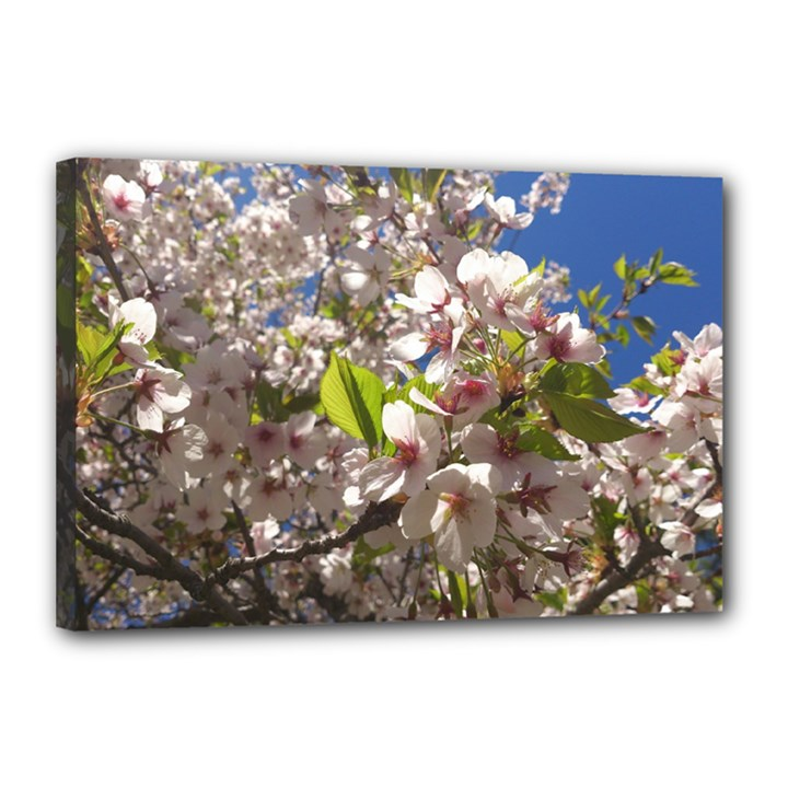 Cherry Blossoms Canvas 18  x 12  (Framed)