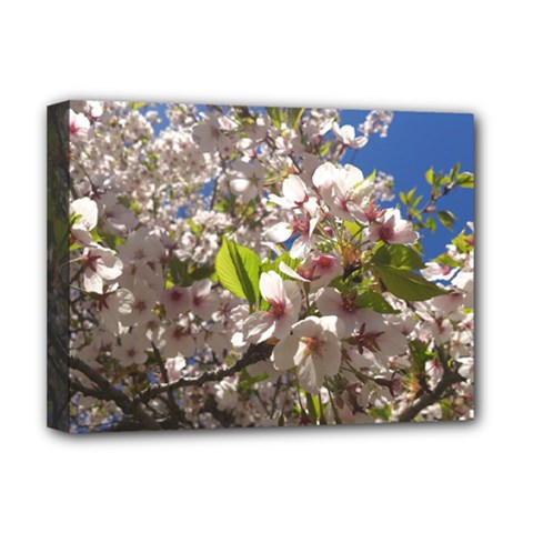Cherry Blossoms Deluxe Canvas 16  X 12  (framed)  by DmitrysTravels